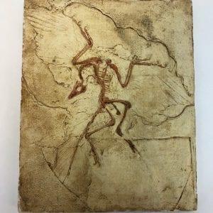 Plaster Cast Prehistoric Bird Fossil