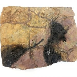 Fossil Plate