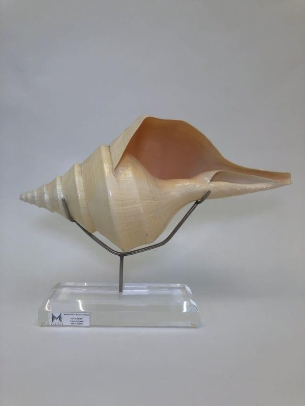 Syrinx Shell